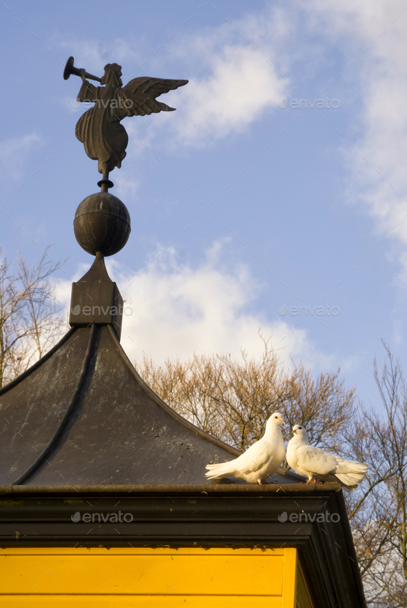 pigeons on a dovecote - Stock Photo - Images