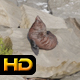 Seal Relaxes on Rock - VideoHive Item for Sale