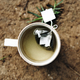 Cup of tea on the ground in nature - PhotoDune Item for Sale