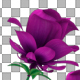 Growing Purple Flowers - VideoHive Item for Sale
