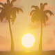 Palm Trees - Sunset Background - VideoHive Item for Sale