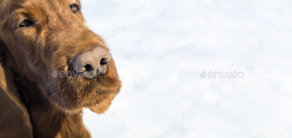 Cute dog nose banner - Stock Photo - Images