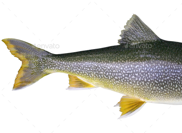 Headless fish - Stock Photo - Images