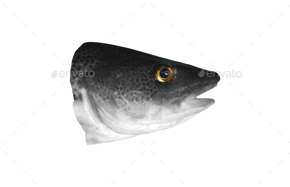 Head of a fish - Stock Photo - Images