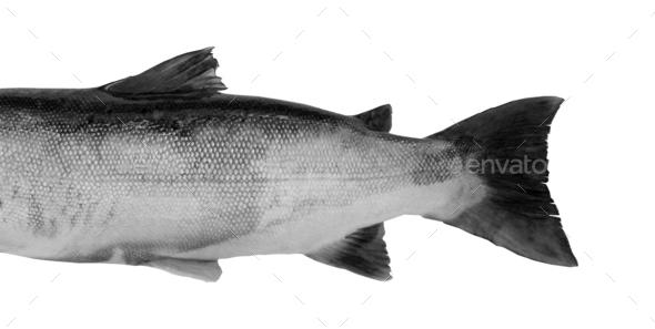 fish Isolated on white background - Stock Photo - Images