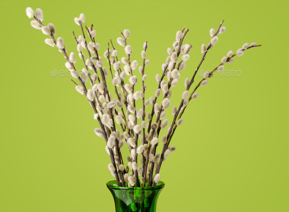 Willow bouquet with pussy willows in green glass vase - Stock Photo - Images