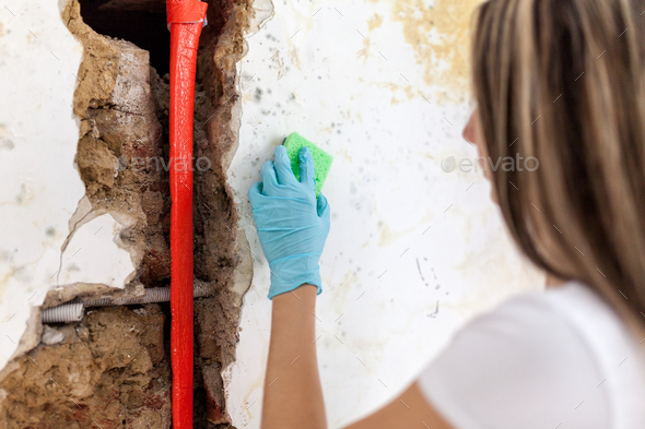 Cleaning up dangerous fungus from a wet wall after water pipe leak - Stock Photo - Images