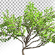 Bush Plant - VideoHive Item for Sale