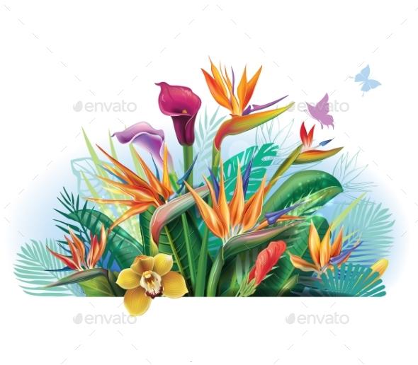 Arrangement with Strelitzia Flowers - Flowers & Plants Nature