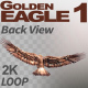 Golden Eagle-1 Back View - VideoHive Item for Sale