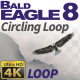 Bald Eagle-8 Circling Loop - VideoHive Item for Sale