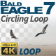 Bald Eagle-7 Circling Loop - VideoHive Item for Sale