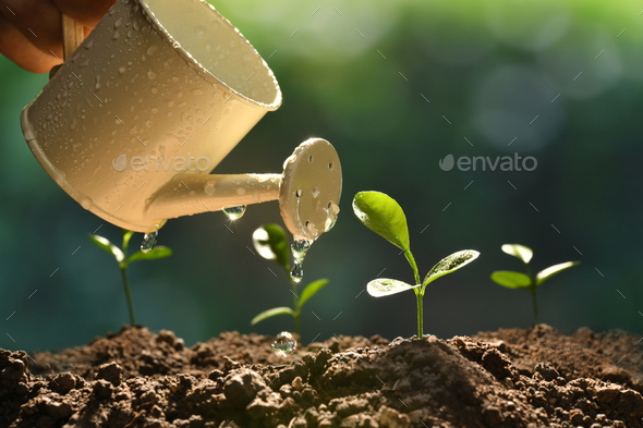 Young Plant - Stock Photo - Images