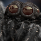 Tiny Black Spider - VideoHive Item for Sale