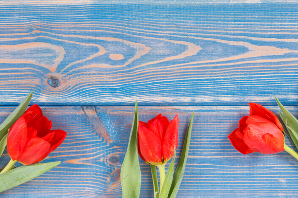 Bouquet of fresh tulips on blue boards, copy space for text - Stock Photo - Images