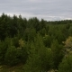 Drone Over Woodland - VideoHive Item for Sale