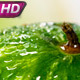 Wet Watermelon on the Bright Background - VideoHive Item for Sale