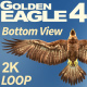 Golden Eagle-4 Bottom View - VideoHive Item for Sale