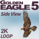 Golden Eagle-5 Side View - VideoHive Item for Sale