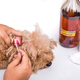 Person cleaning inflammed ear of dog with apple cider vinegar - PhotoDune Item for Sale