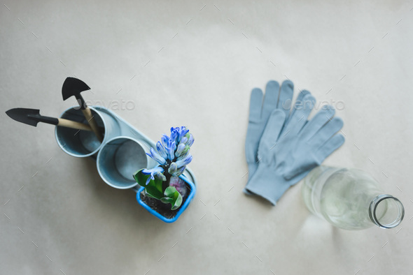 hyacinth, gardening tools, gloves and bottle with water - Stock Photo - Images