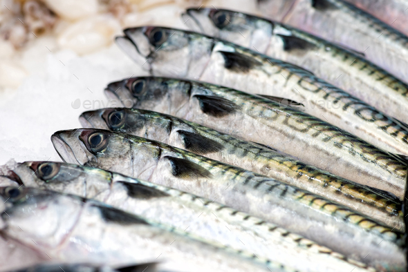 Mackerels fish in close up view - Stock Photo - Images