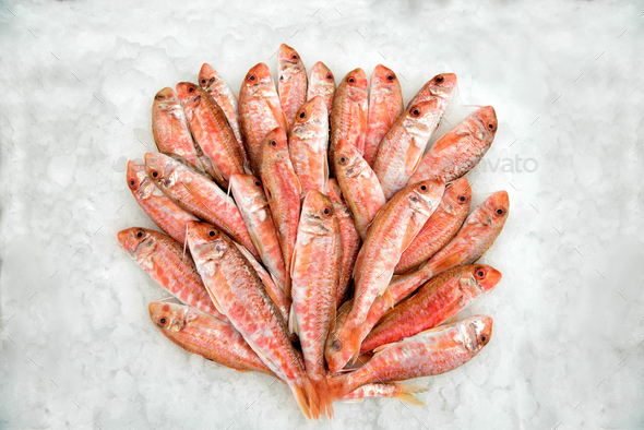 Heap of mullets lying in ice - Stock Photo - Images