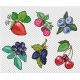Big Collection of Hand Drawn Berries. Vector