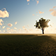 Tree on Meadow - VideoHive Item for Sale