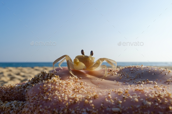 Small Crab on hand of caucasian woman on blue sky background. - Stock Photo - Images