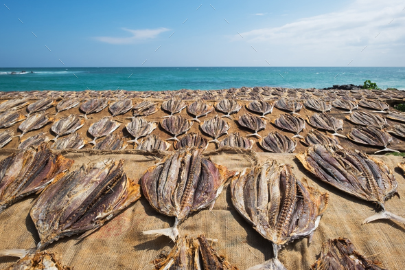 Traditional salted fish drying on racks in Midigama Srilanka - Stock Photo - Images