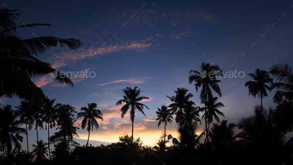 Tropical night view of palm trees and sunset sky - Stock Photo - Images