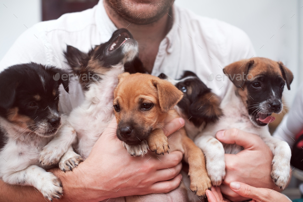 Young man holding 5 puppies in his hands. Cute gog family together. - Stock Photo - Images