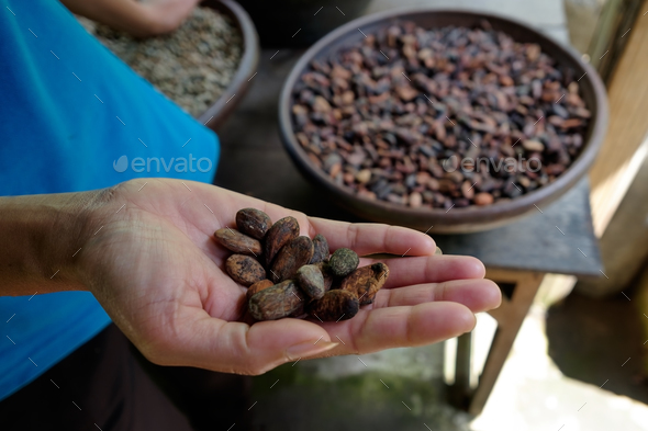 Woman holding cocoa beans in hands - Stock Photo - Images