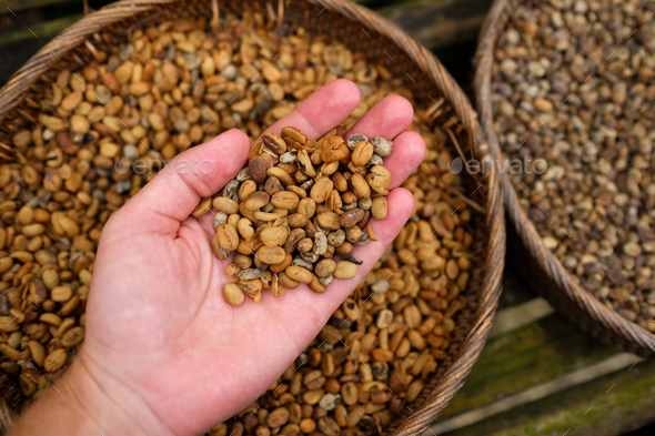 Background of coffee luwak beans - Stock Photo - Images