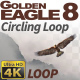 Golden Eagle-8 Circling Loop - VideoHive Item for Sale