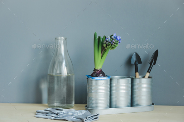 still life of hyacinth mix plant and gardening tools in metal pot, gloves, glass bottle with water - Stock Photo - Images