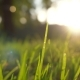 Summer Grass Meadow Motion Blur of Pleasant Wind with Bright Sunlight, Sunny Spring Background - VideoHive Item for Sale