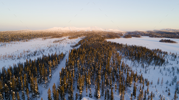 Aerial drone view of idyllic winter landscape. Evergreen snow covered forest from the top, sun rise. - Stock Photo - Images