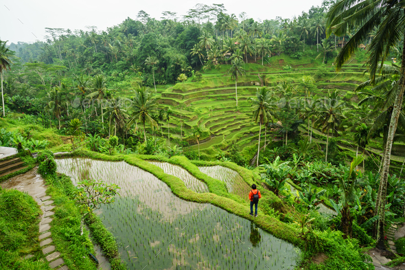 Young traveler looking at beautiful tegallalang rice terrace in Bali - Stock Photo - Images