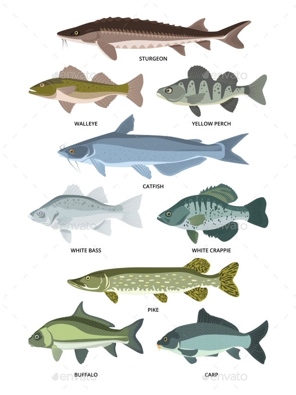 Vector Collection of Different Kinds of Freshwater Fish - Animals Characters