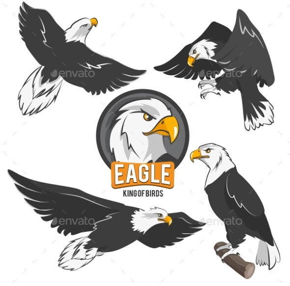 Set of Cartoon Eagles in Different Action Poses - Animals Characters