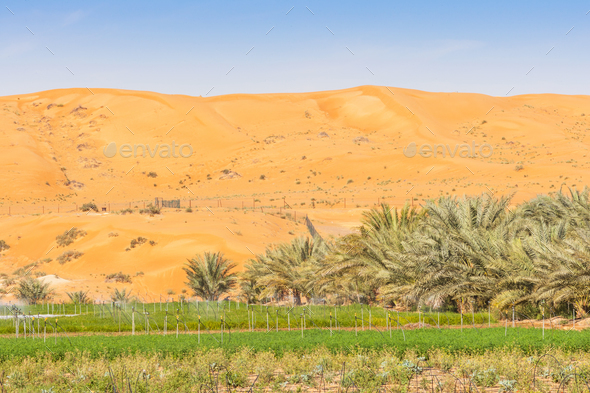 Desert Farm Near Al Ain in the UAE - Stock Photo - Images