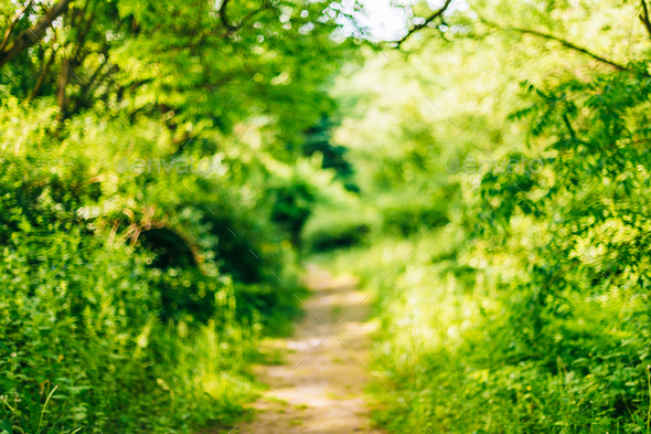 Blurred abstract bokeh natural background of Walkway Path Lane i - Stock Photo - Images
