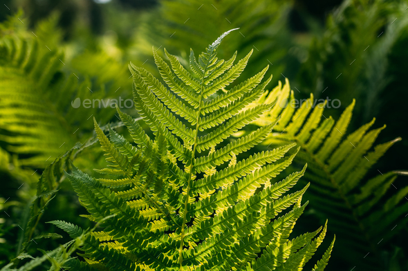 Green Ferns Leaves Green Foliage Natural Floral Fern Background - Stock Photo - Images