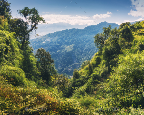 Tropical forest with green tress on the mountain - Stock Photo - Images
