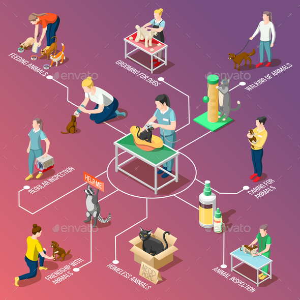 Animal Care Volunteers Isometric Flowchart - Animals Characters