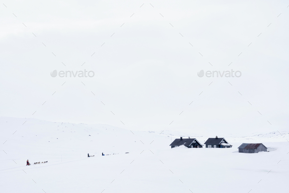 Dog sled on the Hardangervidda - Stock Photo - Images