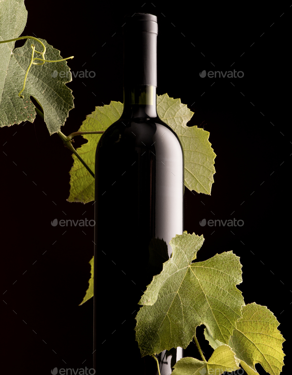 Rew wine bottle with vine branch - Stock Photo - Images