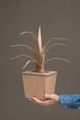 Decorative plant made of cardboard - PhotoDune Item for Sale